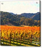 Napa Valley Vineyard In Autumn Colors Acrylic Print by Wingsdomain Art and Photography