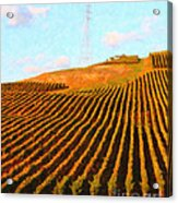 Napa Valley Vineyard . Portrait Cut Acrylic Print by Wingsdomain Art and Photography