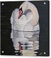 Napping Swan Acrylic Print