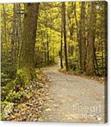 Narrow Way Acrylic Print by Gary Suddath