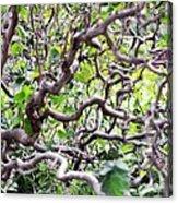 Natural Abstract 3 Acrylic Print