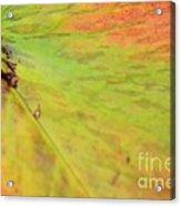 Natural Abstract 42 Acrylic Print
