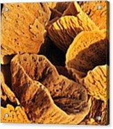 Natural Sponges Acrylic Print