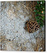Nature Decorations Acrylic Print