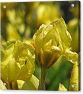 Nature In Yellow Acrylic Print