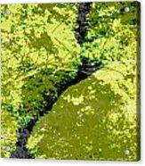 Nature Study Acrylic Print