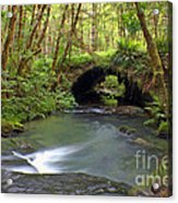 Nature Tunnel Acrylic Print