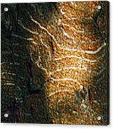 Nature's Abstractions IIi Acrylic Print