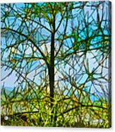 Nature's Church Windows  Acrylic Print