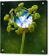 Nature's Diamond Ring Acrylic Print