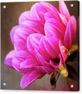 Nature's Effulgence Acrylic Print