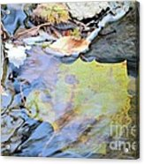Nature's Leaf Collage Acrylic Print
