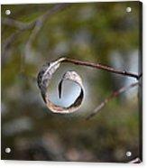 Nature's Natural Eye Acrylic Print