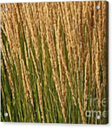 Nature's Own Gold Acrylic Print