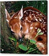 Nature's Precious Creation Acrylic Print