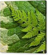 Nature's Still Life 3 Acrylic Print
