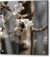Nectar Collector Acrylic Print