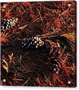Needles Cones And Oak Leaf Acrylic Print