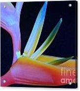 Neon Heliconia Acrylic Print
