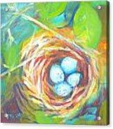 Nest Of Prosperity 1 Acrylic Print