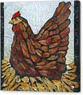 Nesting Hen Acrylic Print