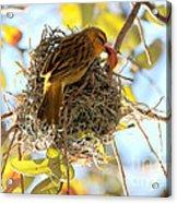 Nesting Instinct Acrylic Print by Carol Groenen