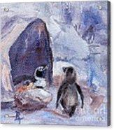 Nesting Penguins Acrylic Print