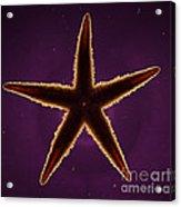 Netted Sea Star Acrylic Print