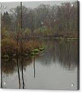 New England Swamp Acrylic Print