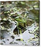 New Hampshire Frog Acrylic Print