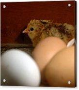 New Hatching Acrylic Print