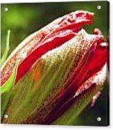 New Hibiscus Acrylic Print