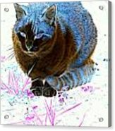 New Kitty Blue Acrylic Print