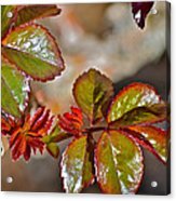 New Leaves Acrylic Print