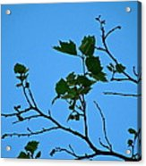 New Leaves Acrylic Print