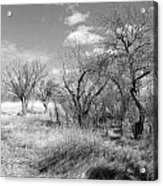 New Mexico Series - Bare Beauty Acrylic Print