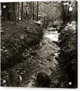 New Mexico Series - Late Winter Streambed Acrylic Print