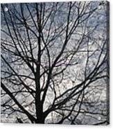 New Year's Morning Acrylic Print