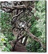 New Zealand Rainfores With Pohutukawa Trees Acrylic Print