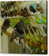 Newborn At The Butterfly Factory  Acrylic Print