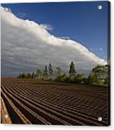 Newly Planted Potato Field And Clouds Acrylic Print