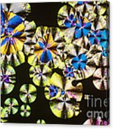 Niacin Acrylic Print