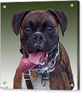 Nice Doggy Acrylic Print