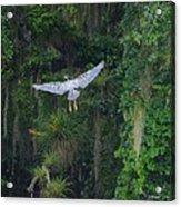 Night Flight Acrylic Print by Lynda Dawson-Youngclaus