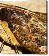 Night Moth Acrylic Print