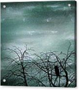 Night Owl Acrylic Print