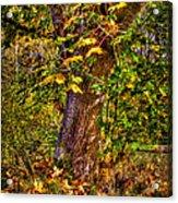 Nisqually Wildlife Refuge P12 The Maple Tree Acrylic Print