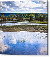 Nisqually Wildlife Refuge P17 Acrylic Print