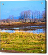 Nisqually Wildlife Refuge P5 Acrylic Print