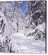 No Footprints Acrylic Print by Rob Travis
